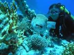 Medzinárodný kurz potápania